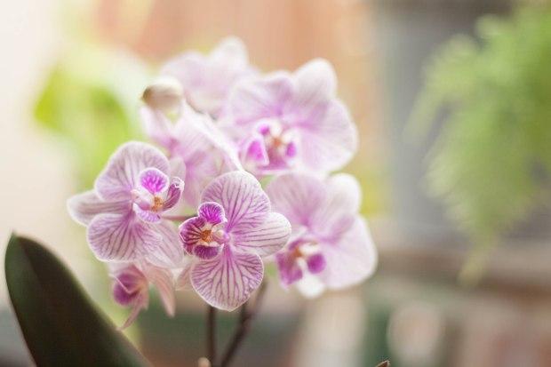 Orquídeas Mafe Roig Photo